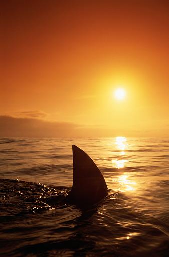 Evil「Shark Fin in Water」:スマホ壁紙(6)