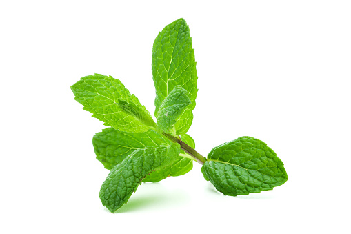 Mint Leaf - Culinary「A giant sprig of lit mint on a white background」:スマホ壁紙(6)
