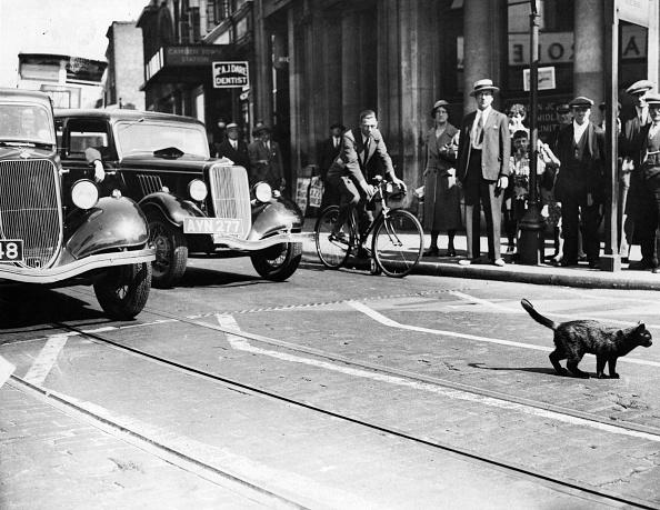 Luck「Cat Crossing」:写真・画像(1)[壁紙.com]