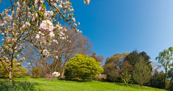 Copse「Spring Is Here vibrant green foliage delicate pink blossom flowers」:スマホ壁紙(2)
