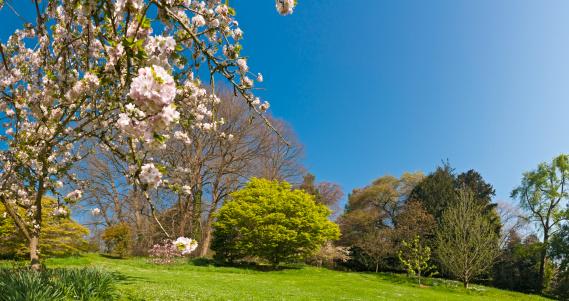 桜「心も弾む春の鮮やかな緑の植物が繊細なピンクの花、花」:スマホ壁紙(0)