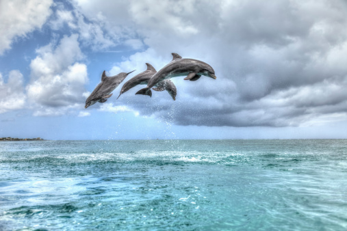 Central America「Bottlenose dolphins」:スマホ壁紙(7)