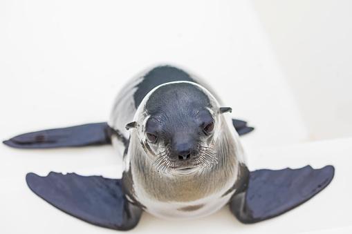 Animals Hunting「Namibia, Walvis Bay, portrait of cape fur seal on boat」:スマホ壁紙(11)