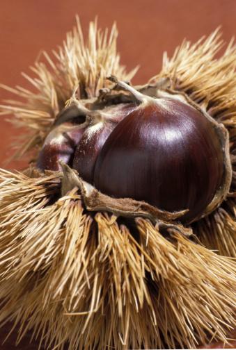 栗「Chestnuts, Close Up」:スマホ壁紙(5)