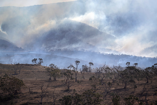 New South Wales「The Survivors: Saving Australian Wildlife Following Fires And Drought」:写真・画像(9)[壁紙.com]