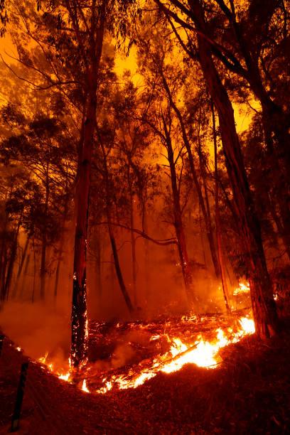 Evacuations Begin Following East Gippsland Bushfires:ニュース(壁紙.com)