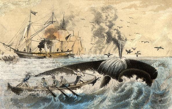 Whale「Whalers」:写真・画像(17)[壁紙.com]