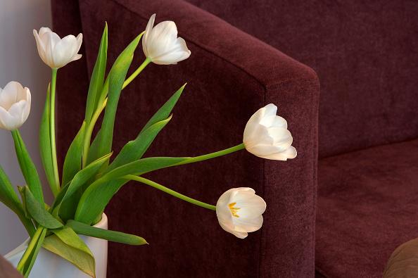 Upholstered Furniture「Cut flowers in vase by sofa」:写真・画像(16)[壁紙.com]