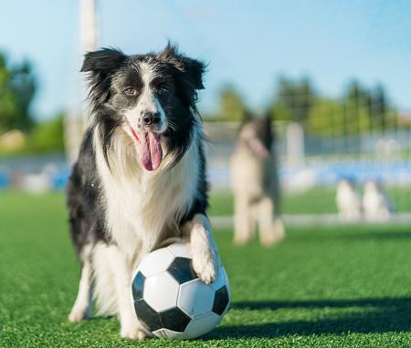 Effort「Football Dog Team」:スマホ壁紙(2)