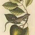 Guana壁紙の画像(壁紙.com)