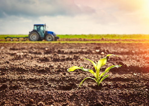 Agriculture「Growing maize crop and tractor working on the field」:スマホ壁紙(4)