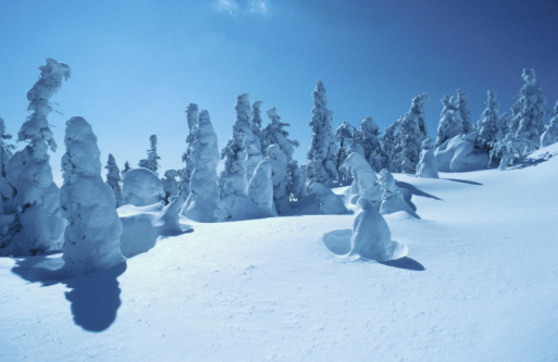 Boreal Forest「Blanket of snow on alpine forest in Canada」:スマホ壁紙(8)