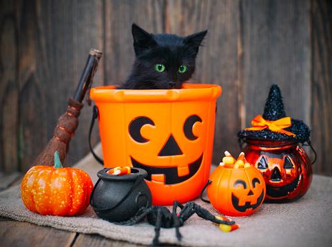 black cat「Halloween pumpkin and black cat on wooden background」:スマホ壁紙(1)