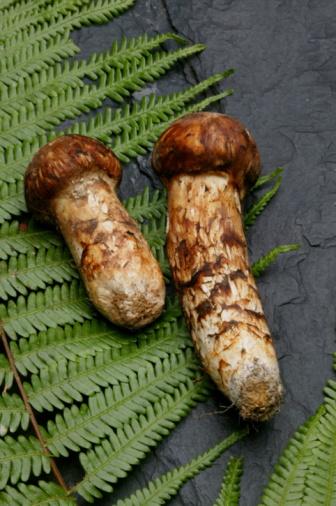 Side By Side「Matsutake mushrooms and a fern lying on a rock」:スマホ壁紙(1)