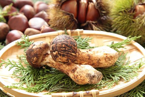 栗「Matsutake Mushrooms and Chestnuts」:スマホ壁紙(15)