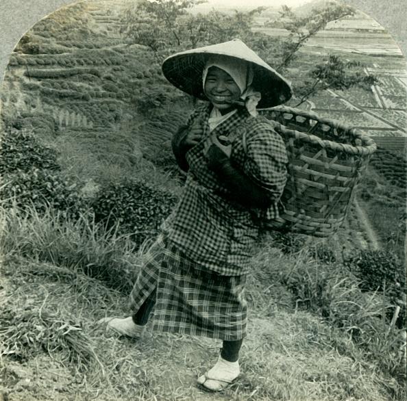 Tokai Region「A Country Girl Among The Famous Tea Fields Of Shizuoka」:写真・画像(1)[壁紙.com]