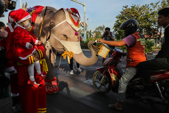 Animal Themes「Elephants In Santa Costumes Deliver Presents To Children」:写真・画像(0)[壁紙.com]