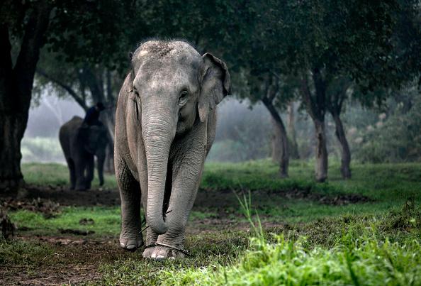 リゾート「Elephant Dung Coffee Produces The World's Most Expensive Cup」:写真・画像(18)[壁紙.com]