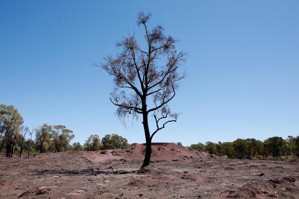 Single Tree「Death Toll Passes 100 As Bushfires Sweep Through Victoria」:写真・画像(16)[壁紙.com]