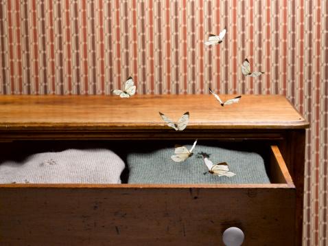 Deterioration「Moths in Sweater Drawer」:スマホ壁紙(2)