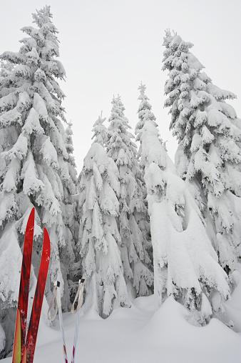 ウィンタースポーツ「Cross country ski and snow covered bohemian forest, Austria」:スマホ壁紙(9)