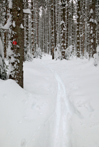 アディロンダック森林保護区「Cross country Ski tracks in new deep power on the Botheration Pond ski trail, Adirondack Park.」:スマホ壁紙(19)