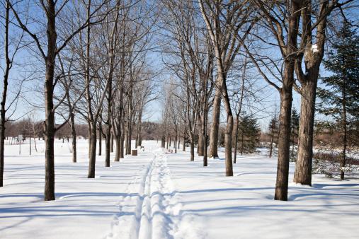 クロスカントリースキー「クロスカントリースキー、トラックモントリオールの公園」:スマホ壁紙(11)