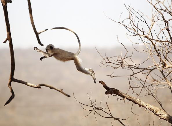 Monkey「Scenes Of India」:写真・画像(11)[壁紙.com]