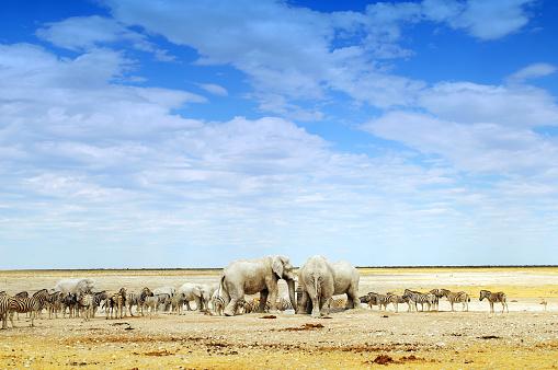 Ecosystem「Elephants and zebras in Etosha National Park,Namibia」:スマホ壁紙(19)