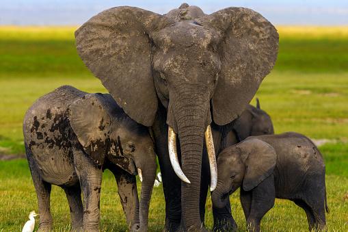 象「Elephants are standing like a model.」:スマホ壁紙(9)