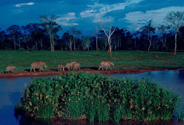 Grass Family「Elephants at Treetops Game Reserve, Kenya」:写真・画像(15)[壁紙.com]