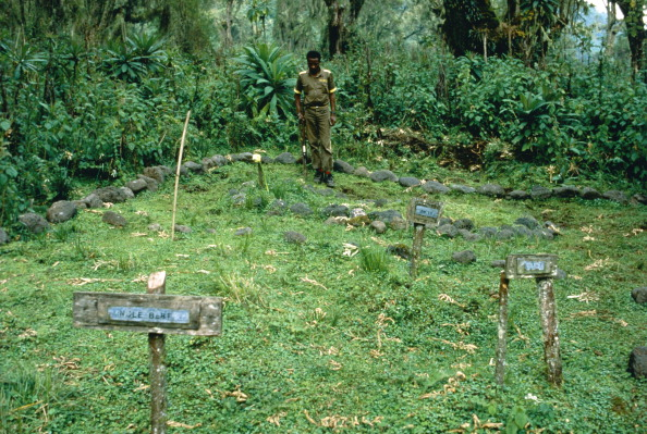 Dian Fossey「Gorilla Graveyard」:写真・画像(1)[壁紙.com]