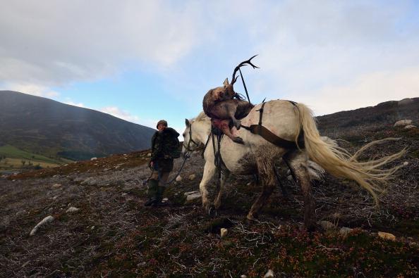 動物「Peter Fraser Practices Traditional Deer Stalking Methods In The Scottish Highlands」:写真・画像(18)[壁紙.com]
