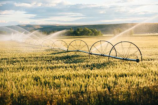 Spraying「Irrigation system watering crops on farm field」:スマホ壁紙(7)