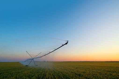 Sprinkler「Irrigation system watering wheat field」:スマホ壁紙(15)