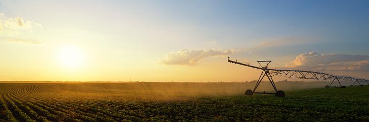 Spraying「Irrigation system watering soybean field」:スマホ壁紙(10)