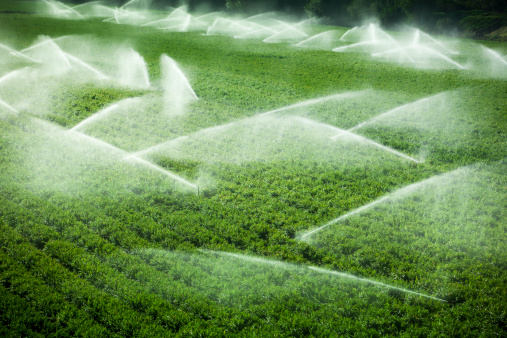Monterey Peninsula「Irrigation sprinkler watering crops on fertile farm land」:スマホ壁紙(7)