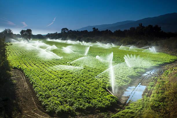 Irrigation sprinkler watering crops on fertile farm land:スマホ壁紙(壁紙.com)