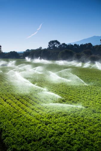 Insecticide「Irrigation sprinkler watering crops on fertile farm land」:スマホ壁紙(2)