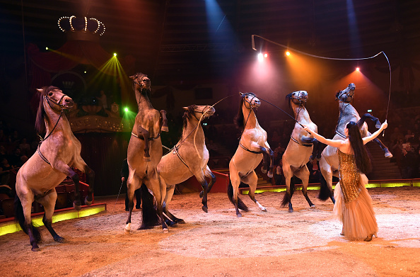 動物「Circus Krone Celebrates Premiere Of 'Krone KUHlinarrisch' In Munich」:写真・画像(5)[壁紙.com]