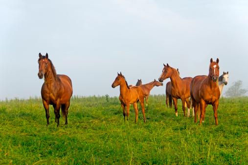 放牧地「馬のパスチュア」:スマホ壁紙(1)