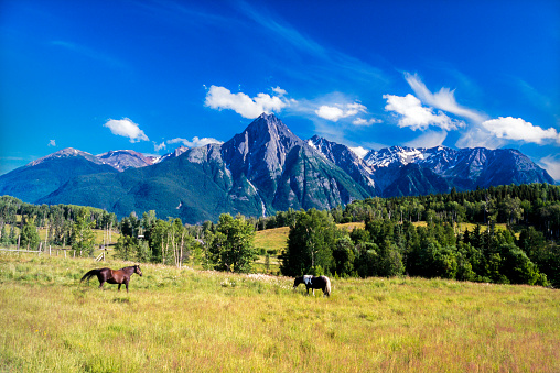 British Columbia Coast Mountains「Horses in prairie Mt Rocher de Boule (2514m) in the backdrop, from Ksan Historical Village. Hazelton, British Columbia」:スマホ壁紙(9)