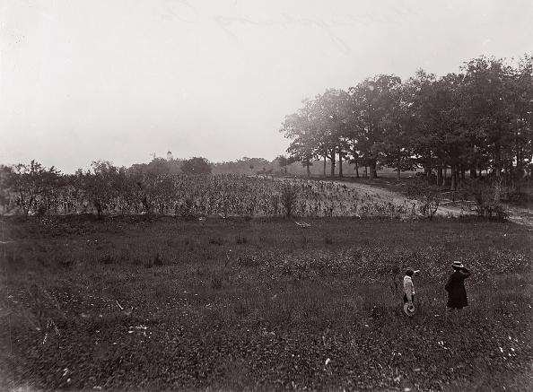 Grass Family「Gettysburg」:写真・画像(19)[壁紙.com]