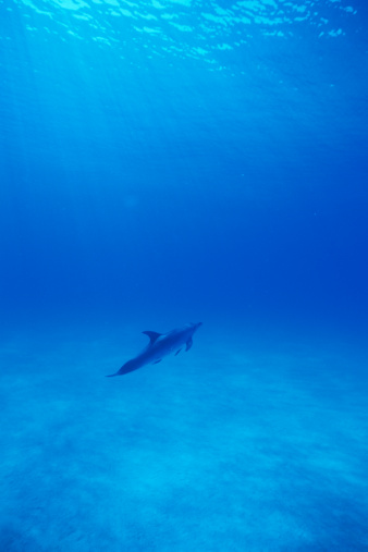 Vertical「A spectacular view of dolphin swimming underwater」:スマホ壁紙(3)