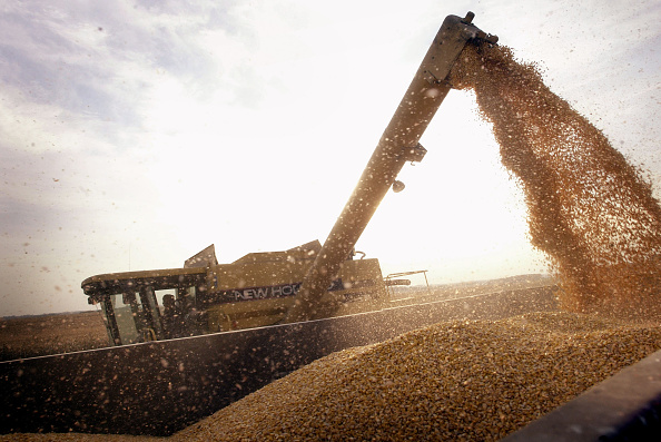 Agriculture「Farmers Decide Yea Or Nay On Genetically Modified Crops 」:写真・画像(18)[壁紙.com]