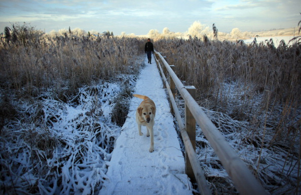 Frost「Freezing Temperatures Sweep The UK」:写真・画像(18)[壁紙.com]
