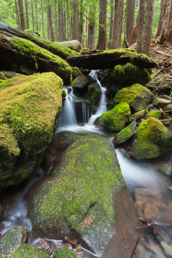 オリンピック雨林「Forest and stream in the Olympic forest」:スマホ壁紙(2)