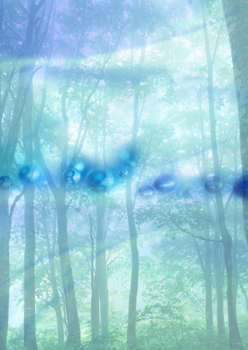 Image processing filter「Forest and water drops」:スマホ壁紙(17)