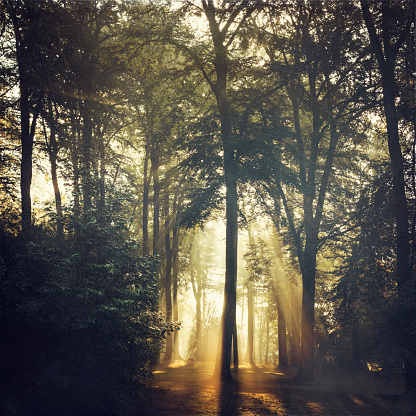 Auto Post Production Filter「Forest and sun light at forest glade」:スマホ壁紙(15)