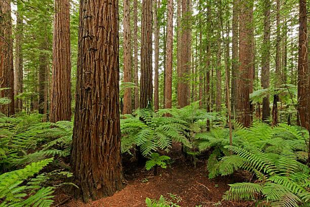 Forest and ferns:スマホ壁紙(壁紙.com)